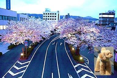 日立・桜通り