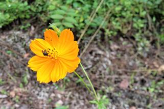 滝川の里 お花